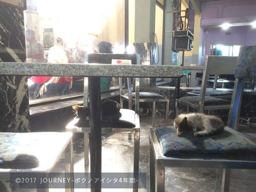 駅で眠るネコ